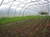 polytunnel action