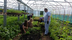 Helping in the polytunnel